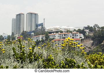 Urban Landscape In Mexico City