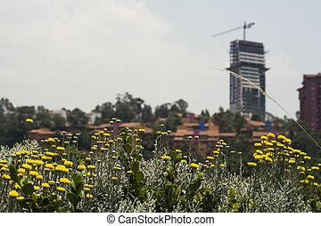 Urban Landscape In Mexico City.