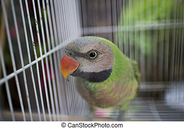 Parrot in a cage