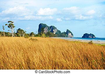 Savanna grasslands, Trang, Thailand