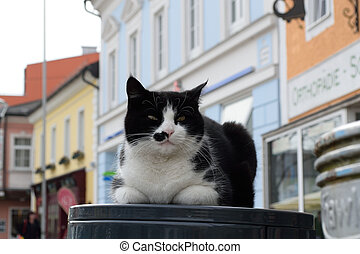 Hauskatze im Freien - Hauskatze macht es sich gemuetlich