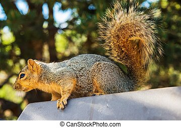 Adult Squirrel - Spring Squirrel Activity. Adult Squirrel in...