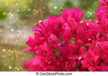 Red Bougainvillea flower.