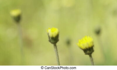 Macro of spring flowers - Translation focus from near yellow...