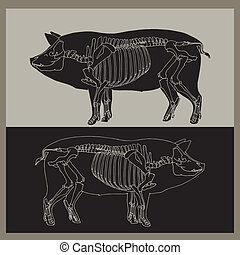Pig skeleton illustration