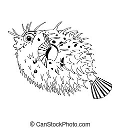 Spine porcupine fish - Original drawing of spine porcupine...