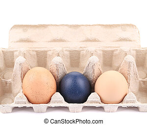 Eggs and egg carton Isolated on a white background