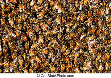 honey bee swarm background - honey bees in a swarm make a...