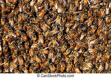 mel, abelha, enxame, fundo