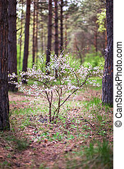 flowering bush of pine forest - flowering bush in the forest