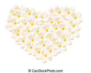 Frangipani Flowers in Heart Shape on White Background