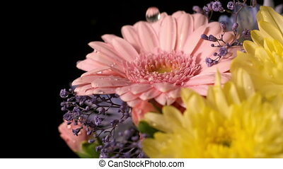 Water dropping onto fresh flowers - Water dropping onto...