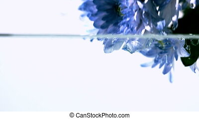 Blue flowers falling into water - Blue flowers falling into...