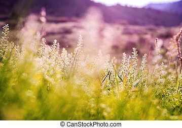 Spring Mountain Meadow Vegetation Closeup Photo.