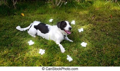 Cute Dog between Flowers - Cute dog sitting in grass between...