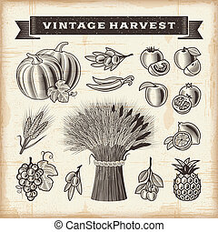 Vintage harvest set - A set of fully editable vintage fruits...
