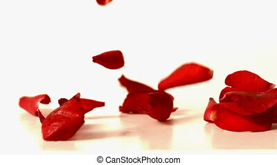 Red rose petals falling onto white surface in slow motion