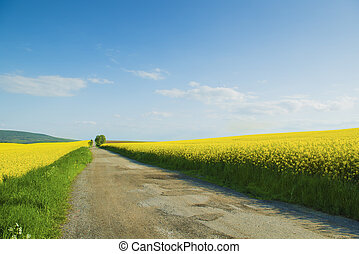 Colza field - Countryside road and yellow colza field under...