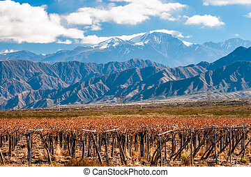 Volcano Aconcagua and Vineyard Aconcagua is the highest...
