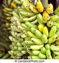 Banana Bunches, Latin America street market, Ecuador, Guayas...