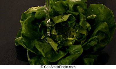 Water pouring over lettuce on black background in slow...