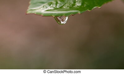 Water falling from a leaf in slow motion