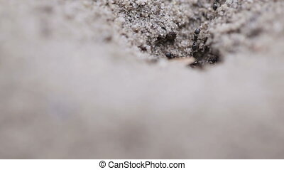 Anthill entrance - Macro dwelling ants in an anthill...
