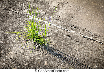 Grass growing  in concrete