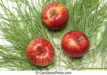 Three red apples, green herb