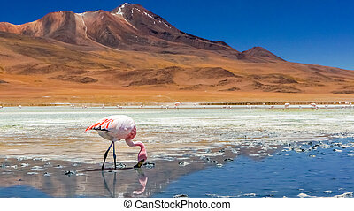 Flamingo in a lake in Atacama desert