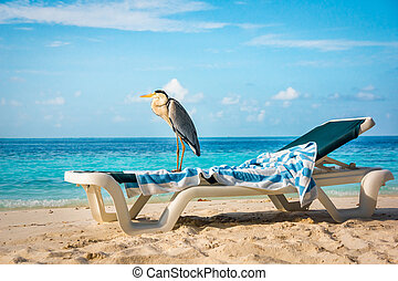 Grey Heron on a sun lounger - Grey Chiron on a sun lounger...