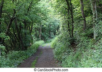 暗い, 緑, 森林, 道