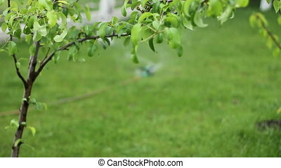 Watering grass in the yard 1080p