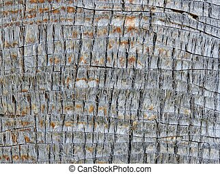 Palm tree bark texture - Abstract palm tree bark texture as...