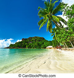 Beautiful beach with palm tree at Seychelles, Praslin, Cote...