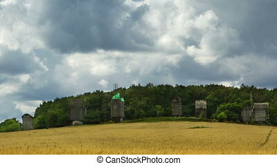 Summer landscape - Wheat field and old windmills on...