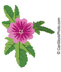 vector illustration of mauve flower malva