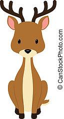 Deer - Baby deer seated