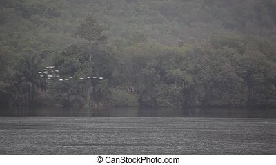 Tropical Jungle, River, Birds - Birds and Traditional Boats...