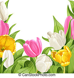 Green background of pink, white and yellow tulips on white...