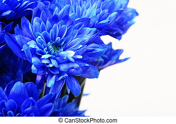 Macro of blue flower aster - Close up of blue flower aster...