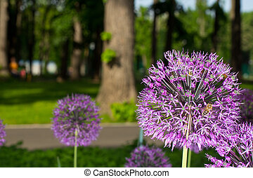 Onion flower decoration in the summer park