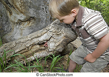 Exploring a hollow tree stump - Toddler boy explores and...