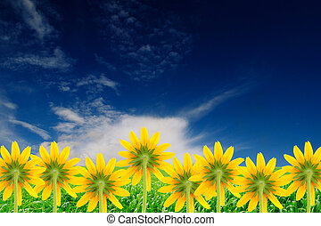 Yellow Flowers Coneflowers on Beautiful Summer Background