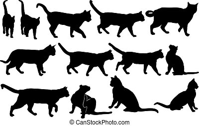 cats - set of different cats isolated