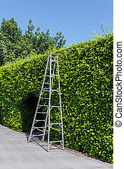 Aluminum ladder with wall green plant,