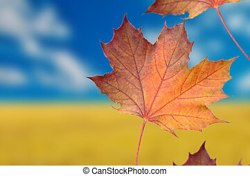 Autumn Background with Red Maple Leaves