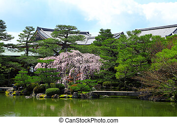 Tropical Garden with Japanese style pavilion