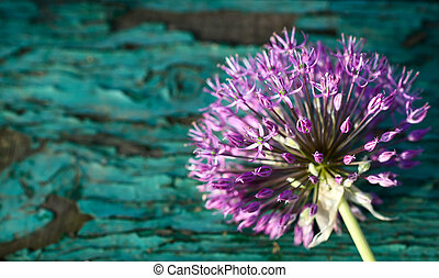Allium on grunge wooden background