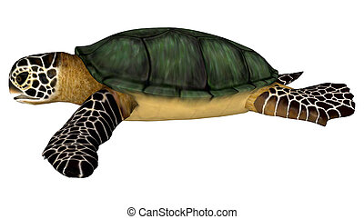 Sea Turtle - 3D digital render of a swimming sea turtle...